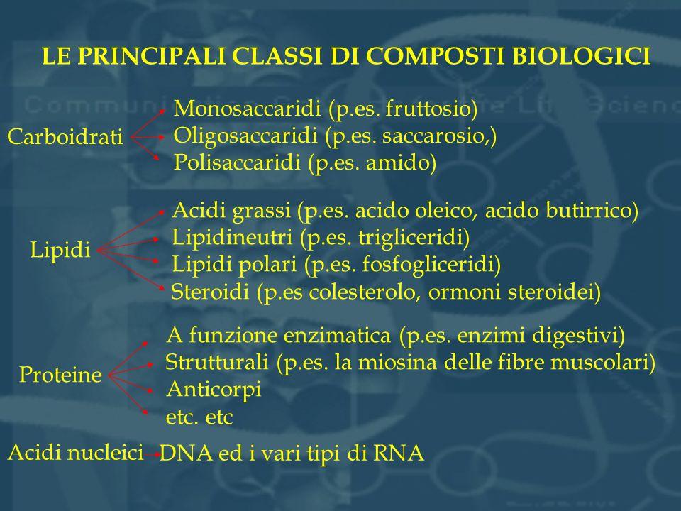 LE PRINCIPALI CLASSI DI COMPOSTI BIOLOGICI Lipidi Acidi grassi (p.es. acido oleico, acido butirrico) Lipidineutri (p.es. trigliceridi) Lipidi polari (