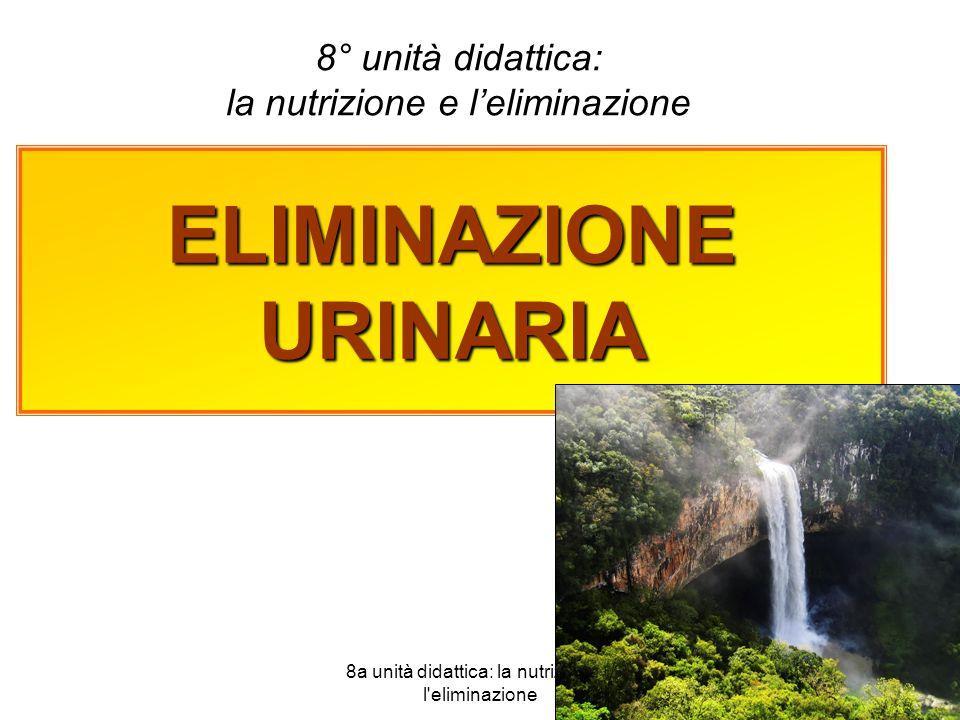 8a unità didattica: la nutrizione e l eliminazione 1 ELIMINAZIONE URINARIA 8° unità didattica: la nutrizione e leliminazione