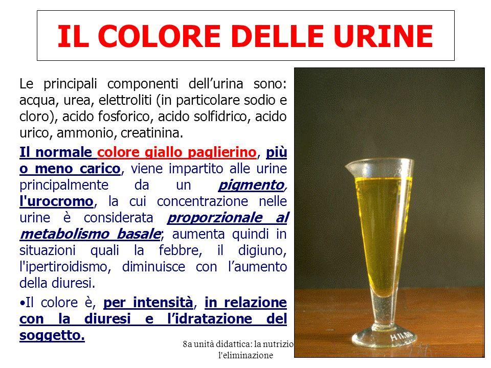 8a unità didattica: la nutrizione e l eliminazione 32 IL COLORE DELLE URINE Le principali componenti dellurina sono: acqua, urea, elettroliti (in particolare sodio e cloro), acido fosforico, acido solfidrico, acido urico, ammonio, creatinina.