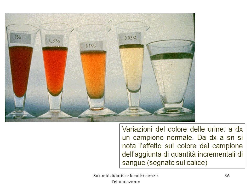 8a unità didattica: la nutrizione e l eliminazione 36 Variazioni del colore delle urine: a dx un campione normale.