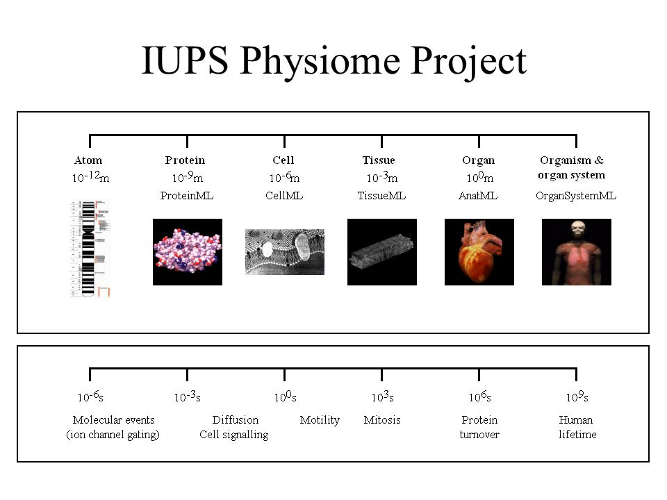IUPS Physiome Project