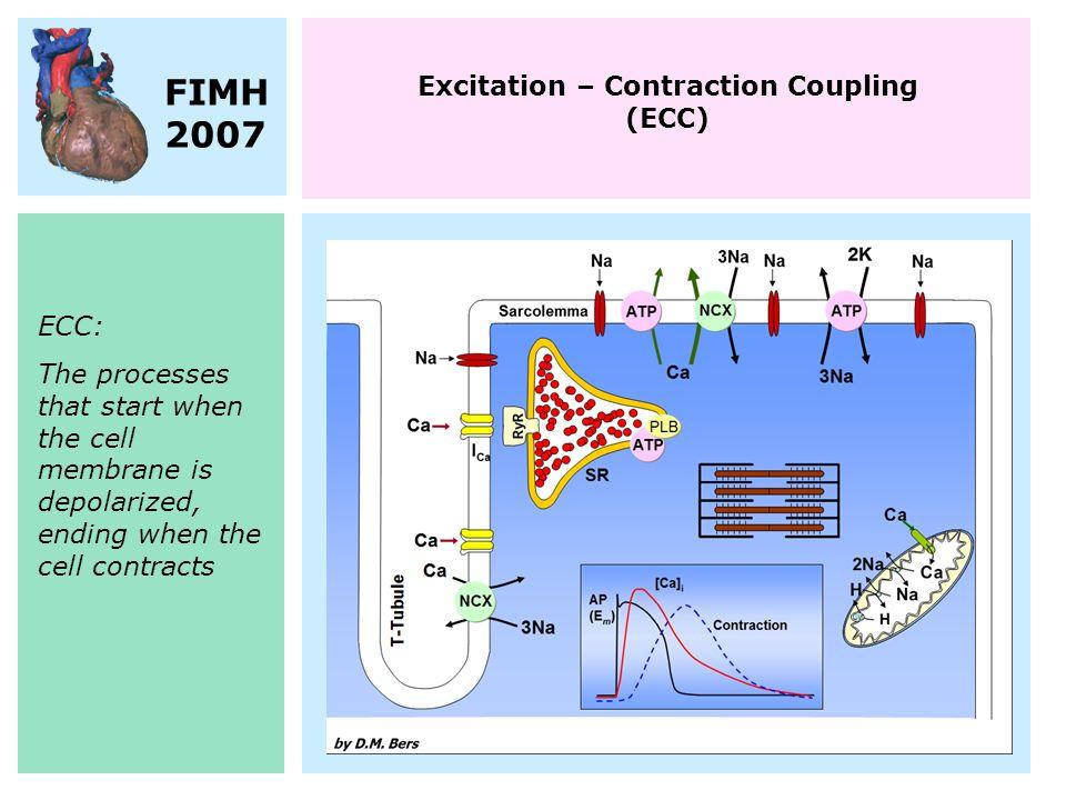 Second-generation models Markov models Species-specificity Human models Local control Mutations… Heterogeneity …
