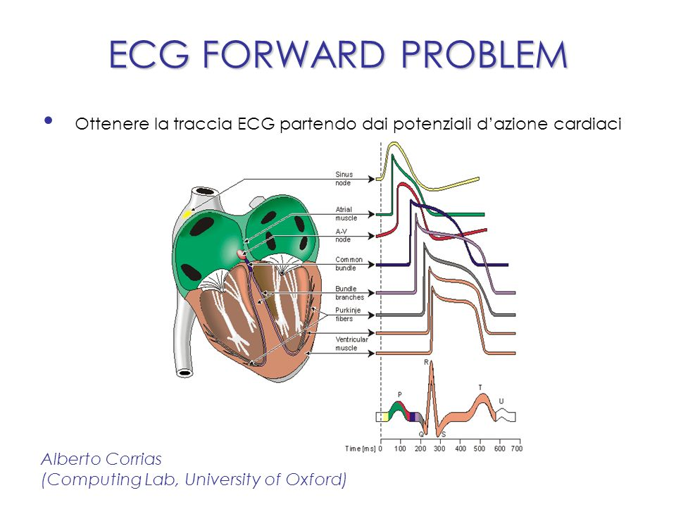 ECG FORWARD PROBLEM Alberto Corrias (Computing Lab, University of Oxford) Ottenere la traccia ECG partendo dai potenziali dazione cardiaci