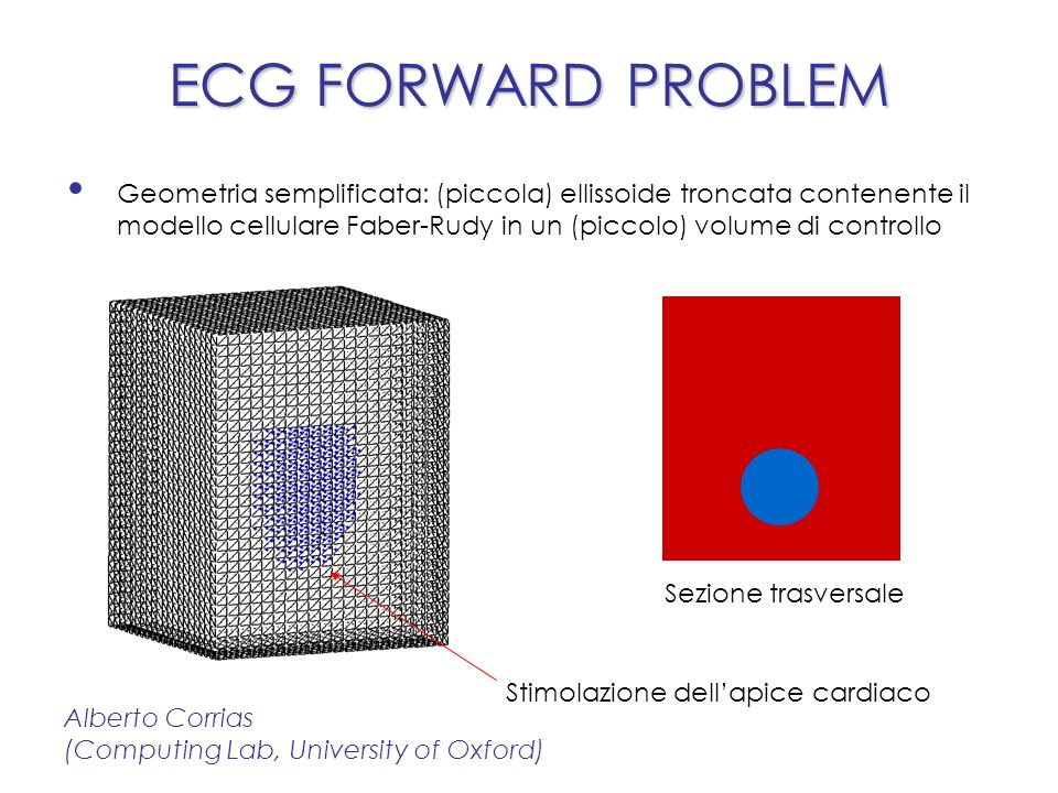 ECG FORWARD PROBLEM Geometria semplificata: (piccola) ellissoide troncata contenente il modello cellulare Faber-Rudy in un (piccolo) volume di controllo Alberto Corrias (Computing Lab, University of Oxford) Sezione trasversale Stimolazione dellapice cardiaco