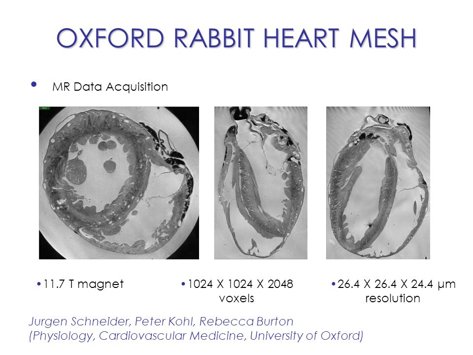 OXFORD RABBIT HEART MESH Segmentazione delle immagini Martin Bishop, Vicente Grau (Computing Lab, Engineering/OeRC, University of Oxford) Discriminazione del tessuto dal volume di background Applicazione di tre filtri di segmentazione