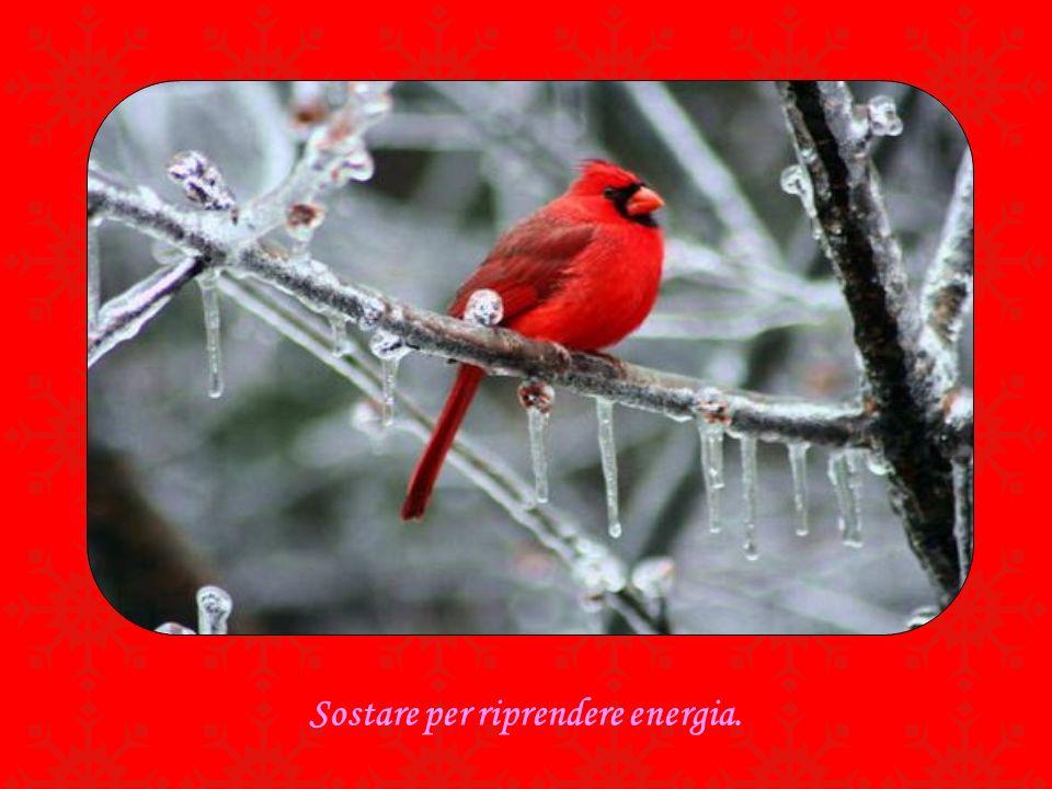 Sostare per riprendere energia.
