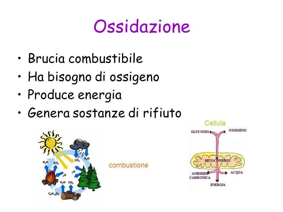 Ossidazione Brucia combustibile Ha bisogno di ossigeno Produce energia Genera sostanze di rifiuto Cellula combustione