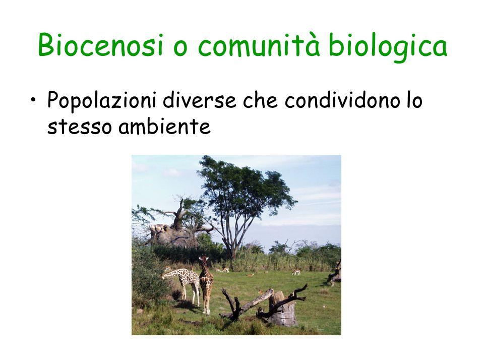 Biocenosi o comunità biologica Popolazioni diverse che condividono lo stesso ambiente