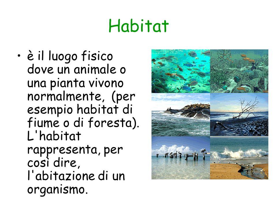 Habitat è il luogo fisico dove un animale o una pianta vivono normalmente, (per esempio habitat di fiume o di foresta). L'habitat rappresenta, per cos