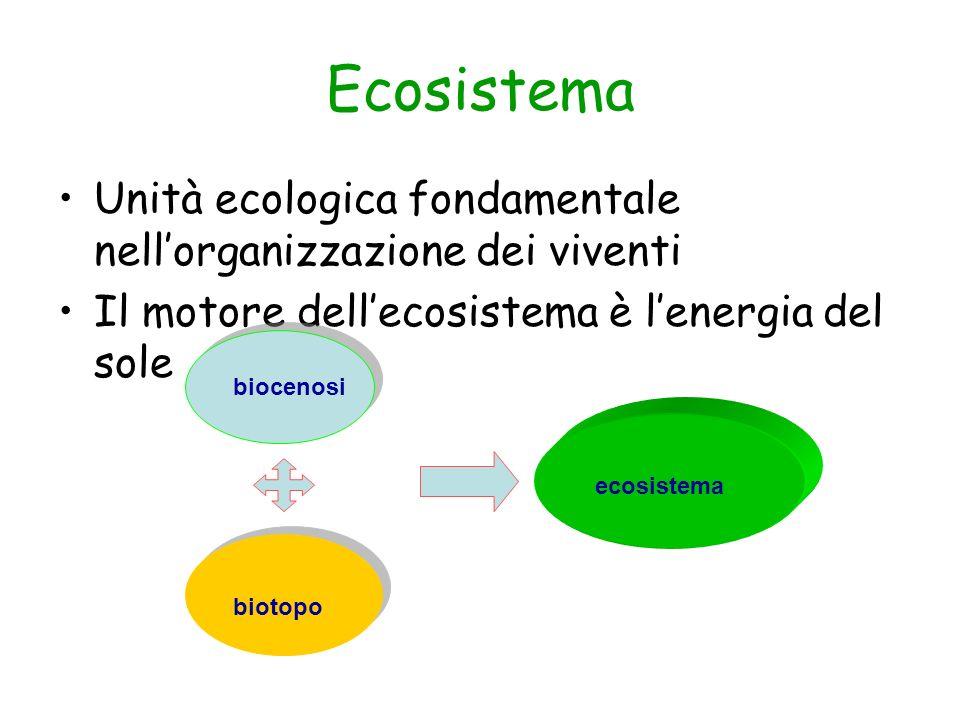 Ecosistema Unità ecologica fondamentale nellorganizzazione dei viventi Il motore dellecosistema è lenergia del sole biocenosi biotopo ecosistema
