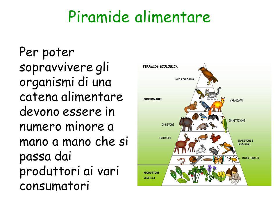 Piramide alimentare Per poter sopravvivere gli organismi di una catena alimentare devono essere in numero minore a mano a mano che si passa dai produt