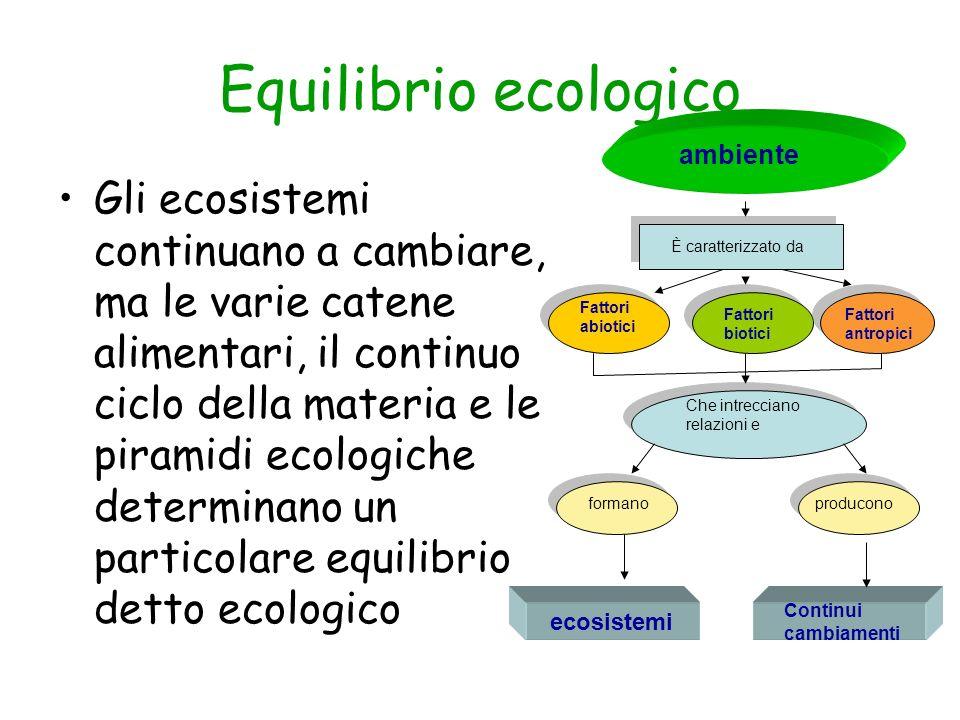 Equilibrio ecologico Gli ecosistemi continuano a cambiare, ma le varie catene alimentari, il continuo ciclo della materia e le piramidi ecologiche det