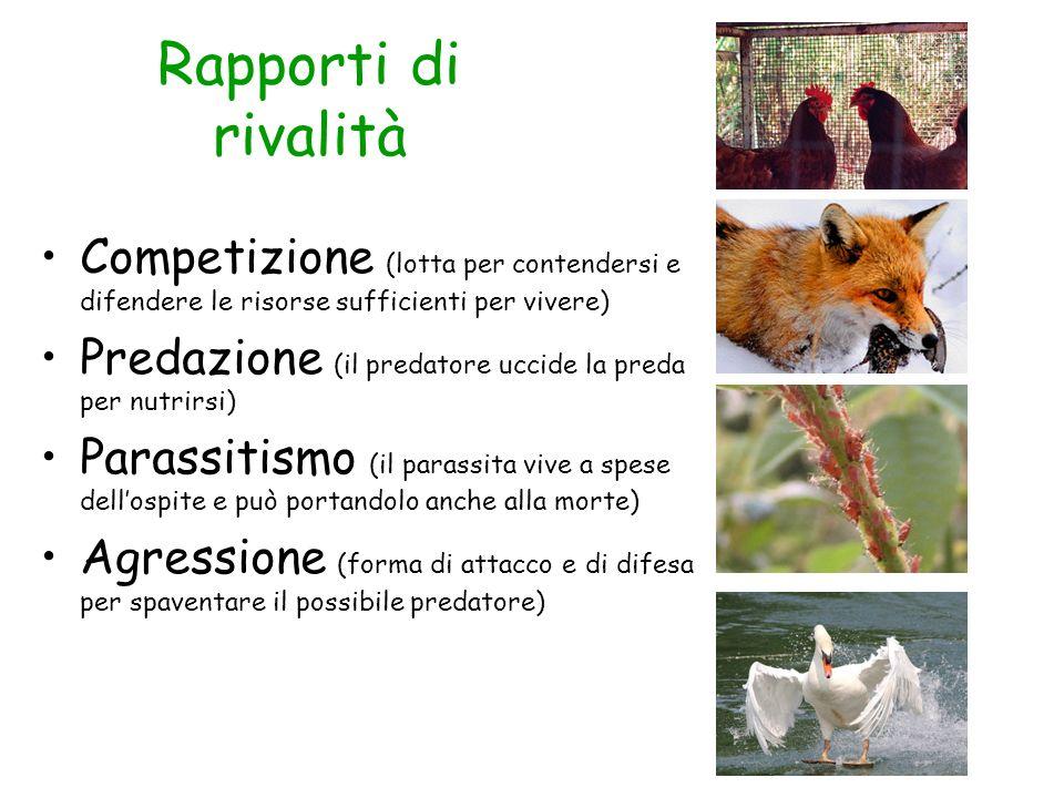 Rapporti di rivalità Competizione (lotta per contendersi e difendere le risorse sufficienti per vivere) Predazione (il predatore uccide la preda per n