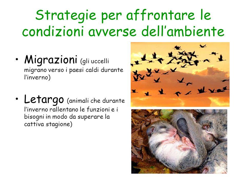 Strategie per affrontare le condizioni avverse dellambiente Migrazioni (gli uccelli migrano verso i paesi caldi durante linverno) Letargo (animali che