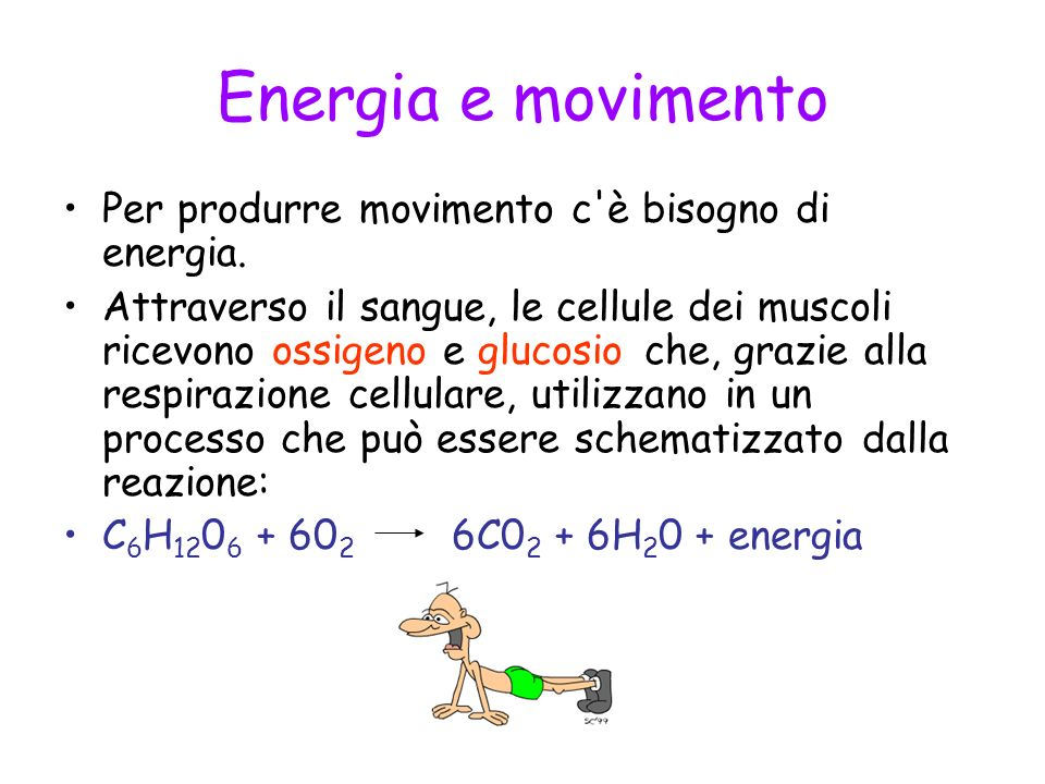 Energia e movimento Per produrre movimento c'è bisogno di energia. Attraverso il sangue, le cellule dei muscoli ricevono ossigeno e glucosio che, graz