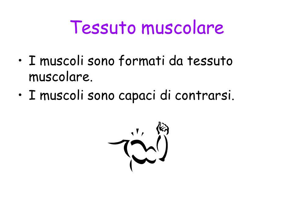 Tessuto muscolare I muscoli sono formati da tessuto muscolare. I muscoli sono capaci di contrarsi.