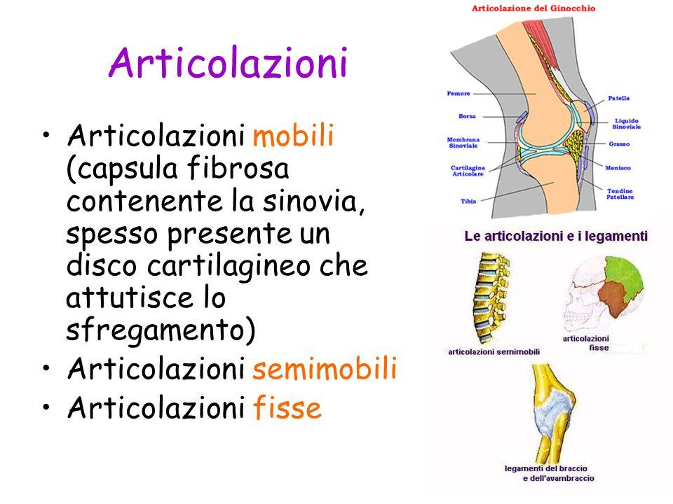 Articolazioni Articolazioni mobili (capsula fibrosa contenente la sinovia, spesso presente un disco cartilagineo che attutisce lo sfregamento) Articol
