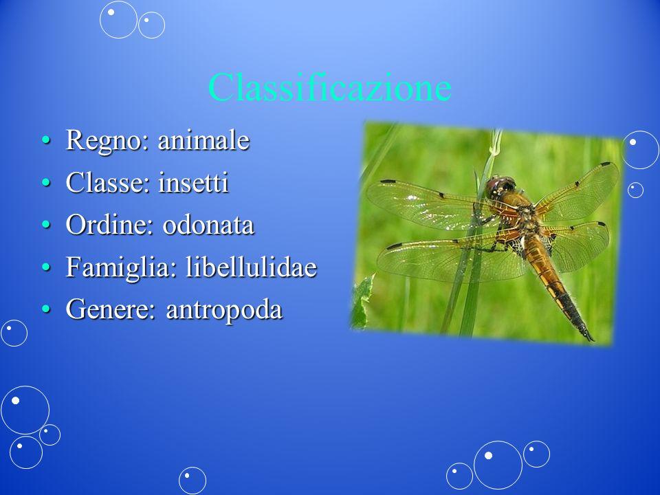Classificazione Regno: animaleRegno: animale Classe: insettiClasse: insetti Ordine: odonataOrdine: odonata Famiglia: libellulidaeFamiglia: libellulida