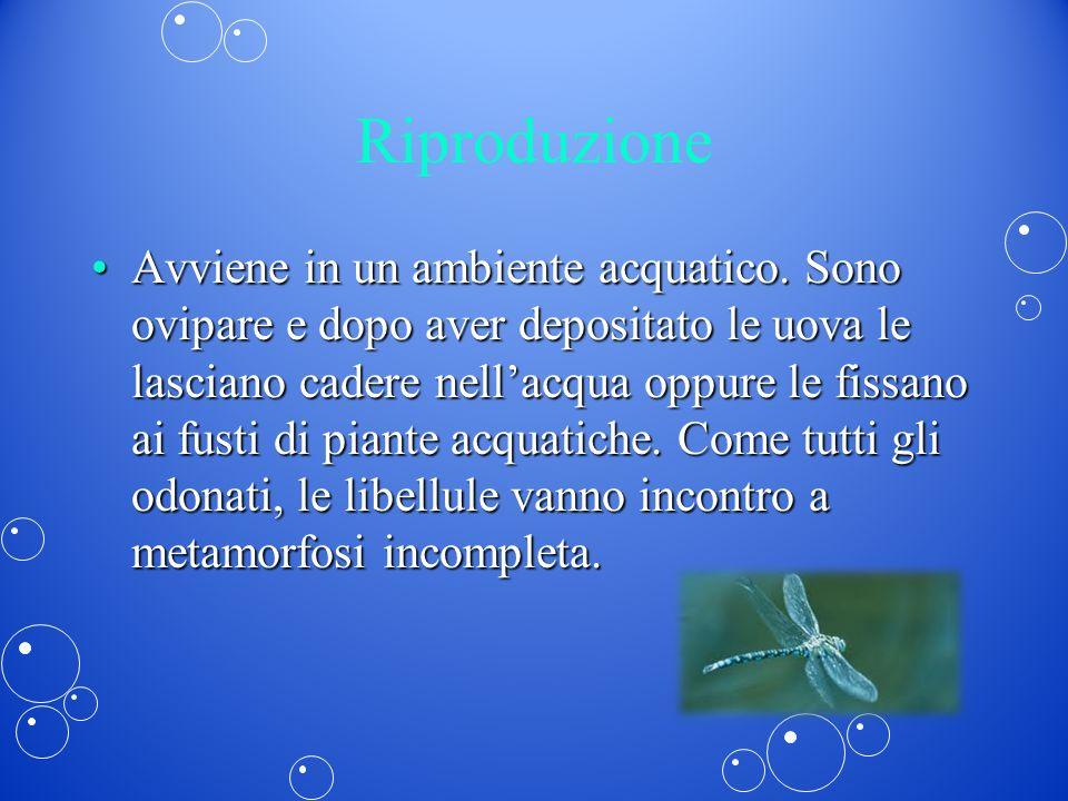 Riproduzione Avviene in un ambiente acquatico. Sono ovipare e dopo aver depositato le uova le lasciano cadere nellacqua oppure le fissano ai fusti di