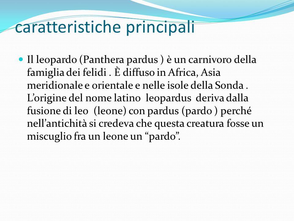 caratteristiche principali Il leopardo (Panthera pardus ) è un carnivoro della famiglia dei felidi. È diffuso in Africa, Asia meridionale e orientale