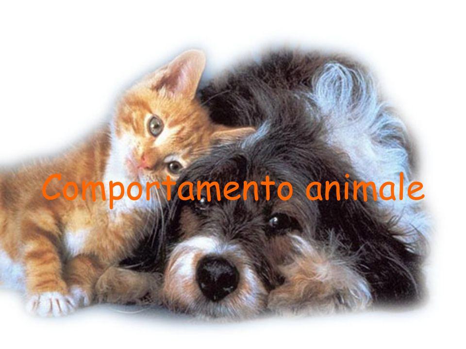 Etologia Scienza che studia il comportamento animale