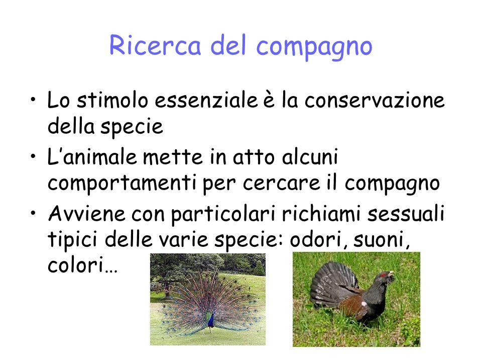 Ricerca del compagno Lo stimolo essenziale è la conservazione della specie Lanimale mette in atto alcuni comportamenti per cercare il compagno Avviene con particolari richiami sessuali tipici delle varie specie: odori, suoni, colori…