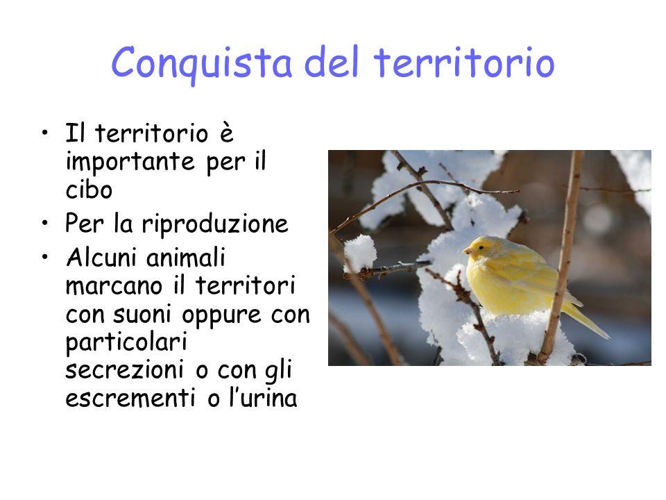 Conquista del territorio Il territorio è importante per il cibo Per la riproduzione Alcuni animali marcano il territori con suoni oppure con particolari secrezioni o con gli escrementi o lurina