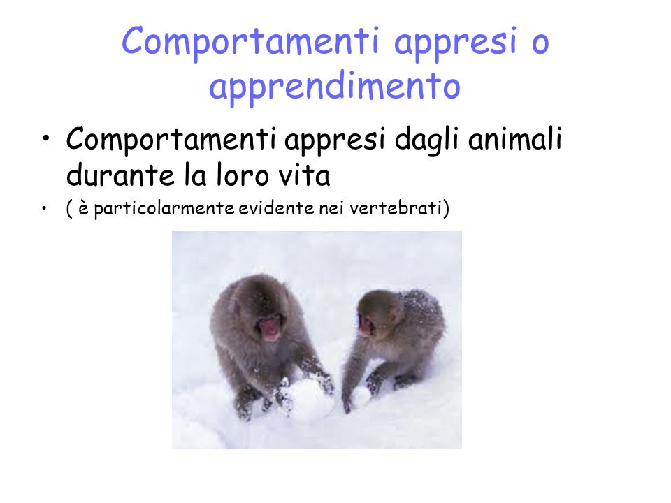 Comportamenti appresi o apprendimento Comportamenti appresi dagli animali durante la loro vita ( è particolarmente evidente nei vertebrati)