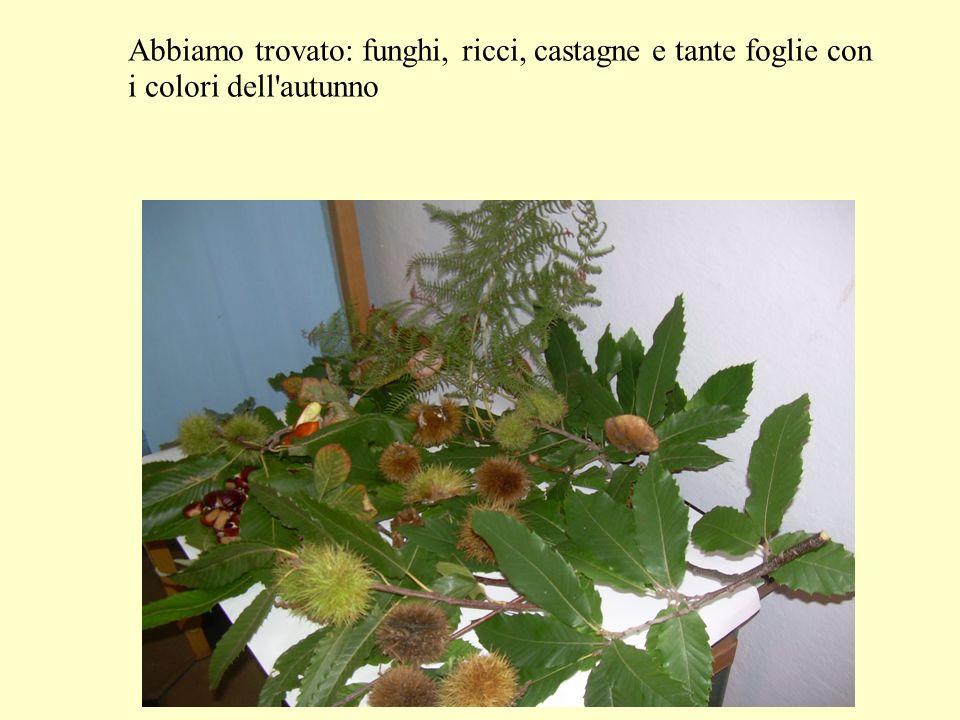 Abbiamo trovato: funghi, ricci, castagne e tante foglie con i colori dell'autunno