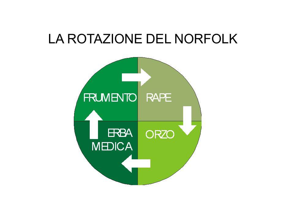 LA ROTAZIONE DEL NORFOLK