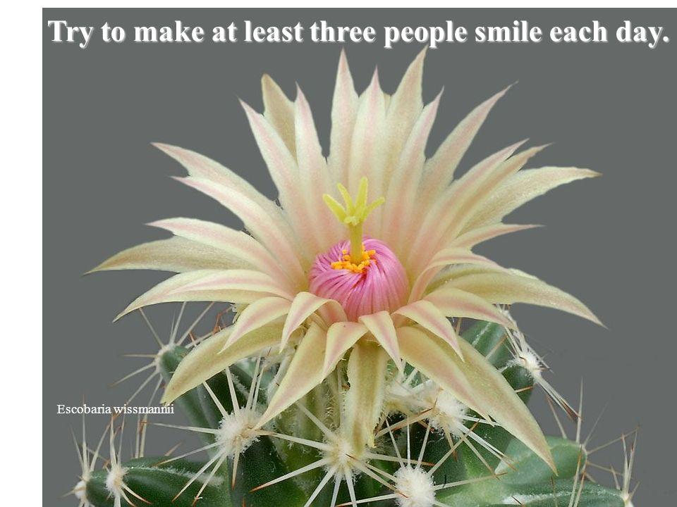 Rebutia pallida Smile and laugh more.