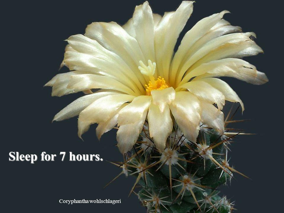 Coryphantha wohlschlageri Sleep for 7 hours.