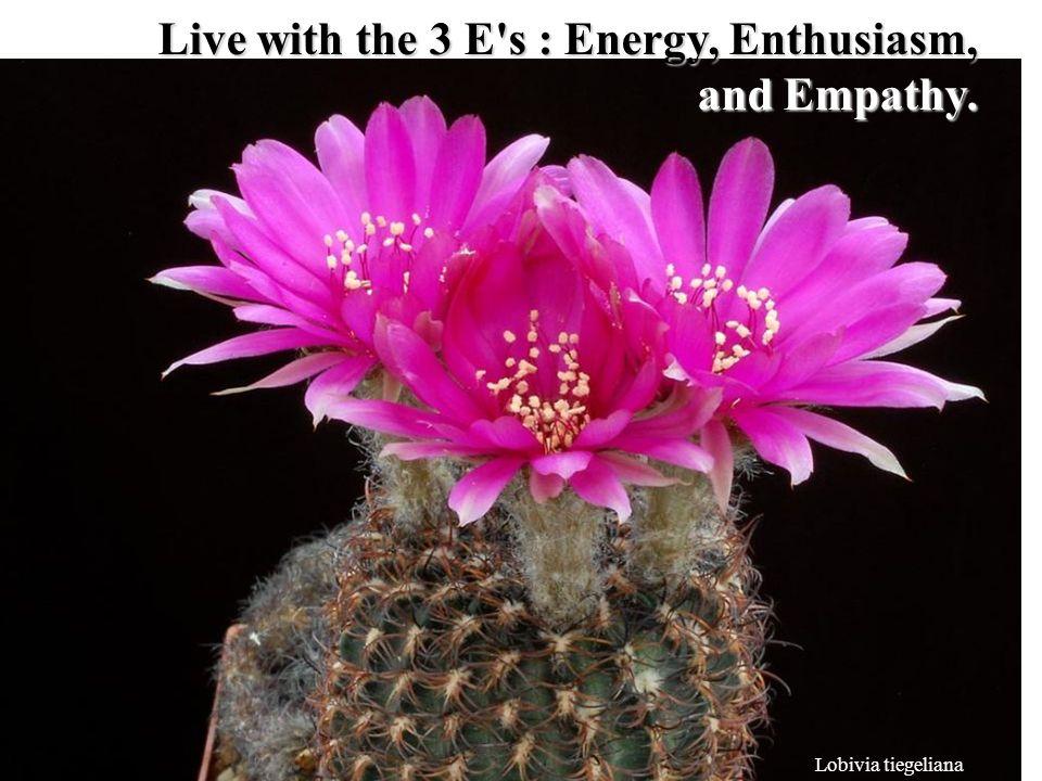Lobivia tiegeliana Live with the 3 E s : Energy, Enthusiasm, and Empathy.