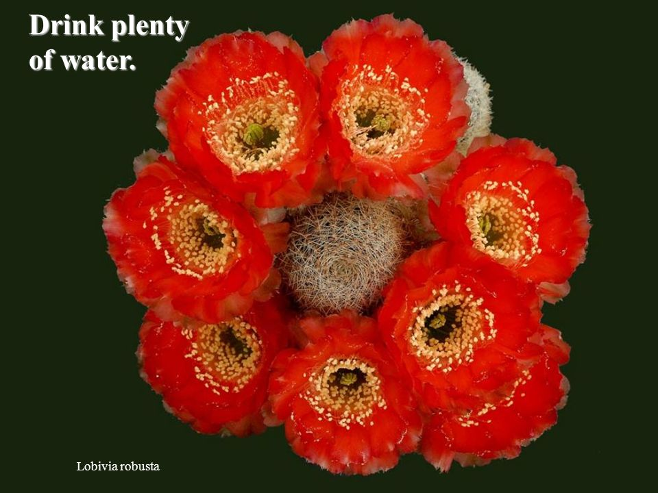 Rebutia poecilantha Read more books than you did in 2009.