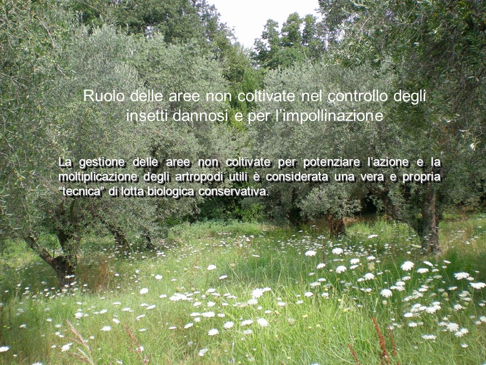 La gestione delle aree non coltivate per potenziare lazione e la moltiplicazione degli artropodi utili è considerata una vera e propria tecnica di lot