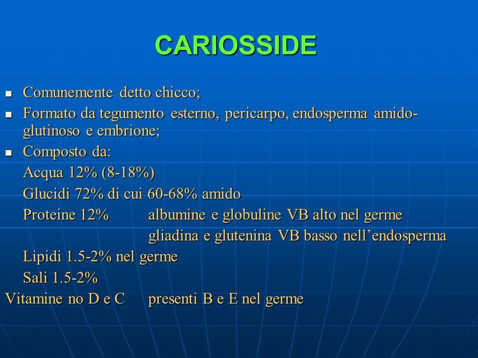 CARIOSSIDE Comunemente detto chicco; Comunemente detto chicco; Formato da tegumento esterno, pericarpo, endosperma amido- glutinoso e embrione; Format