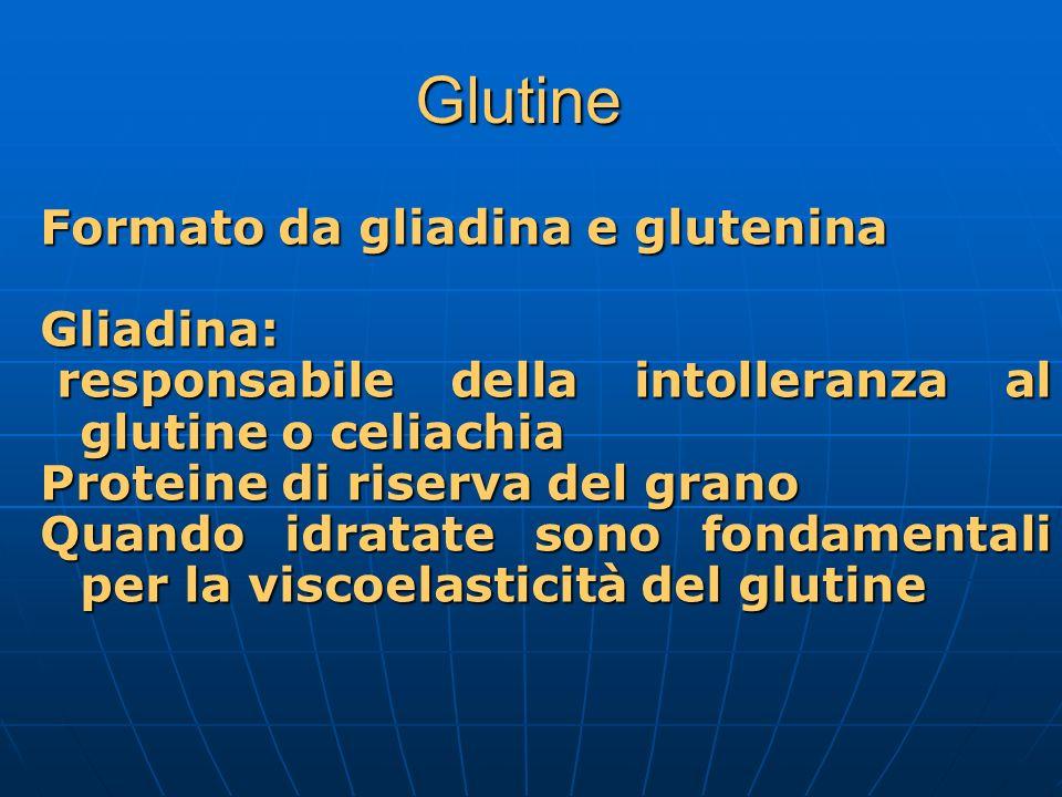 Glutine Formato da gliadina e glutenina Gliadina: responsabile della intolleranza al glutine o celiachia responsabile della intolleranza al glutine o