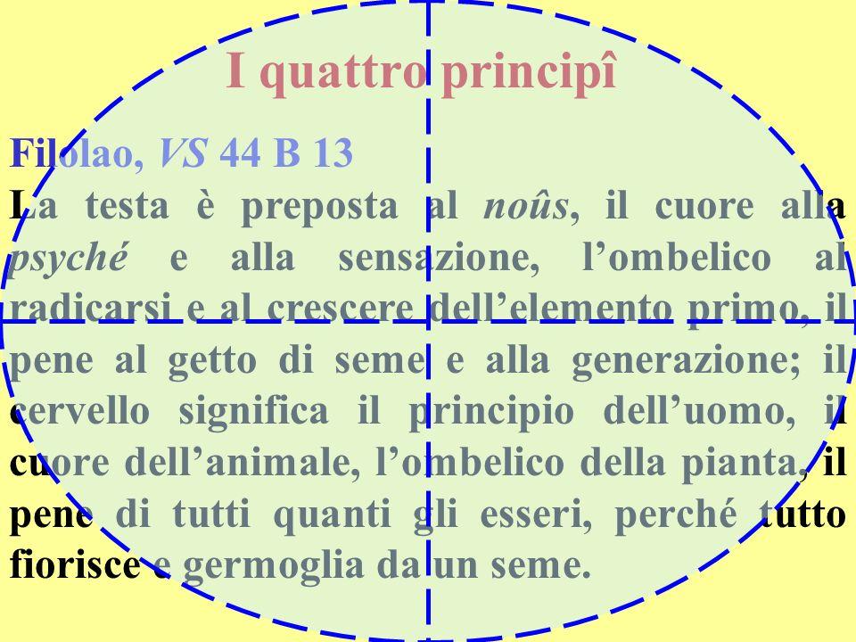 I quattro principî Filolao, VS 44 B 13 La testa è preposta al noûs, il cuore alla psyché e alla sensazione, lombelico al radicarsi e al crescere delle