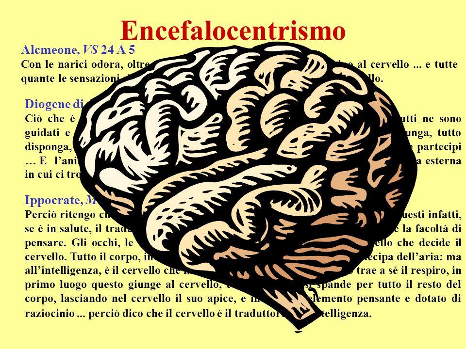 Encefalocentrismo Alcmeone, VS 24 A 5 Con le narici odora, oltre a respirare, e conduce su il respiro sino al cervello... e tutte quante le sensazioni