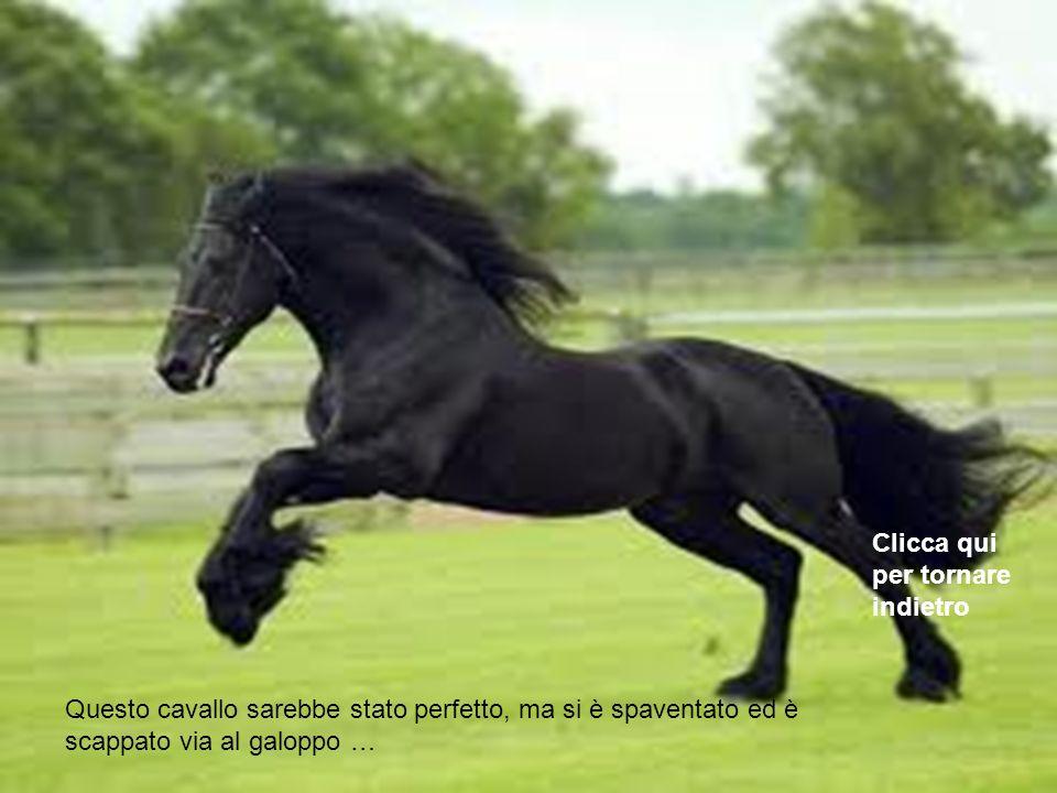 Questo cavallo in verità è un pegaso, ed è volato via da te! Clicca qui per tornare indietro