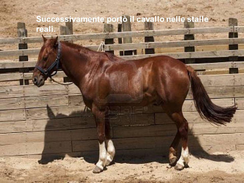 Questo cavallo sarebbe stato perfetto, ma si è spaventato ed è scappato via al galoppo … Clicca qui per tornare indietro