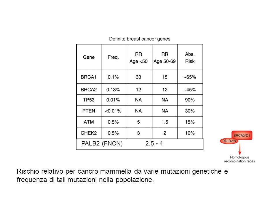 Rischio relativo per cancro mammella da varie mutazioni genetiche e frequenza di tali mutazioni nella popolazione. PALB2 (FNCN) 2.5 - 4