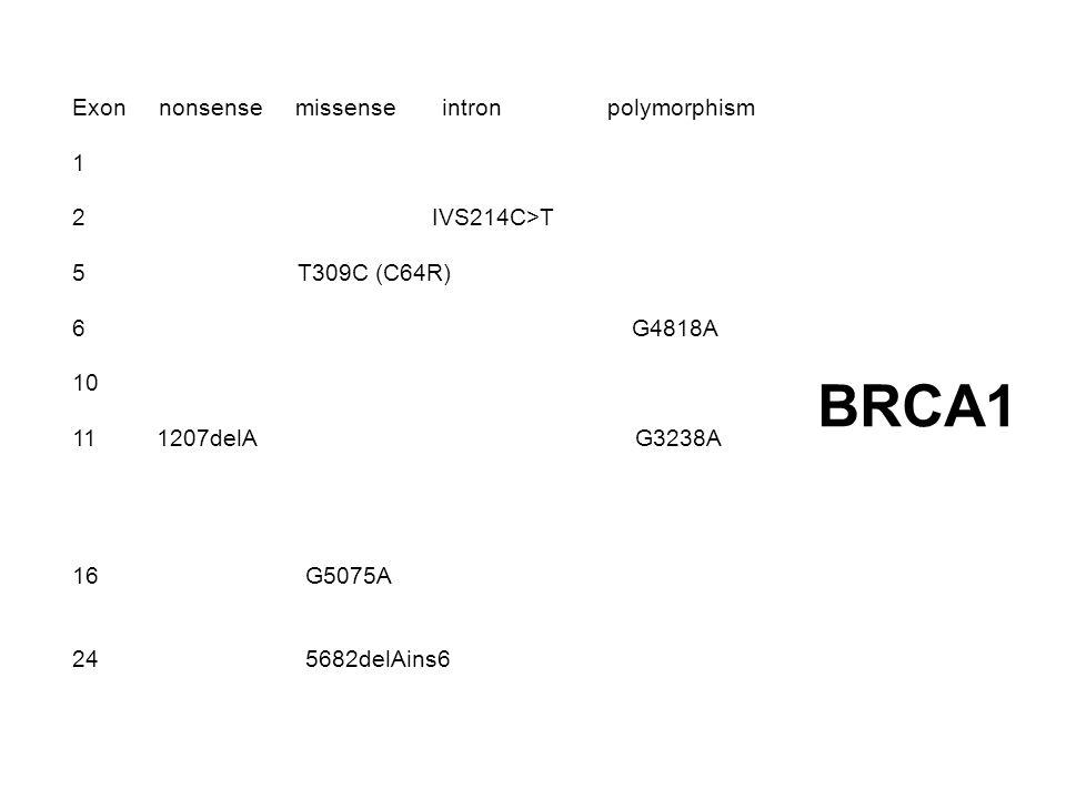 Exon nonsense missense intron polymorphism 1 2 IVS214C>T 5 T309C (C64R) 6 G4818A 10 11 1207delA G3238A 16 G5075A 24 5682delAins6 BRCA1
