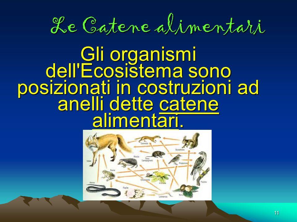 11 Le Catene alimentari Gli organismi dell'Ecosistema sono posizionati in costruzioni ad anelli dette catene alimentari.