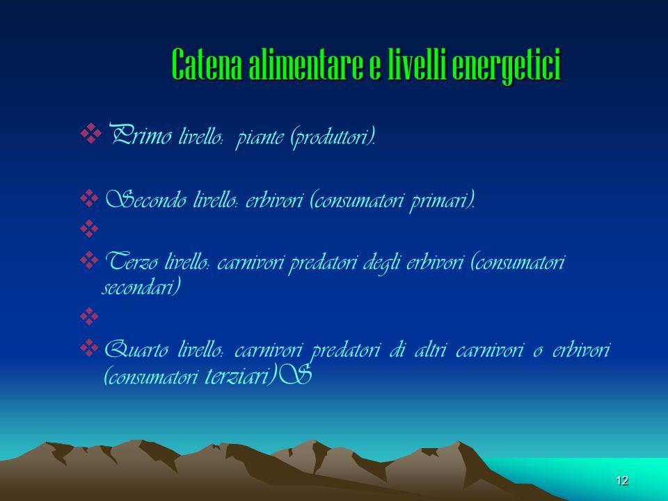 12 Catena alimentare e livelli energetici Primo livello: piante (produttori). Secondo livello: erbivori (consumatori primari). Terzo livello: carnivor