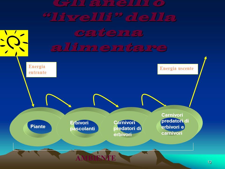 12 Gli anelli o livelli della catena alimentare Energia entrante Energia uscente Piante Erbivori pascolanti Carnivori predatori di erbivori Carnivori