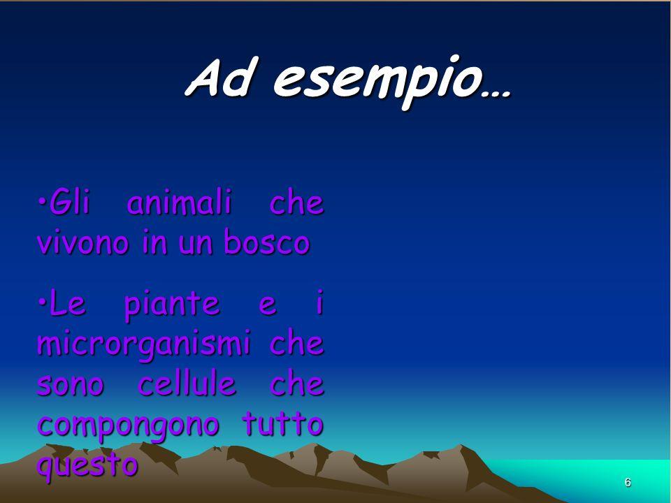6 Ad esempio … Gli animali che vivono in un boscoGli animali che vivono in un bosco Le piante e i microrganismi che sono cellule che compongono tutto