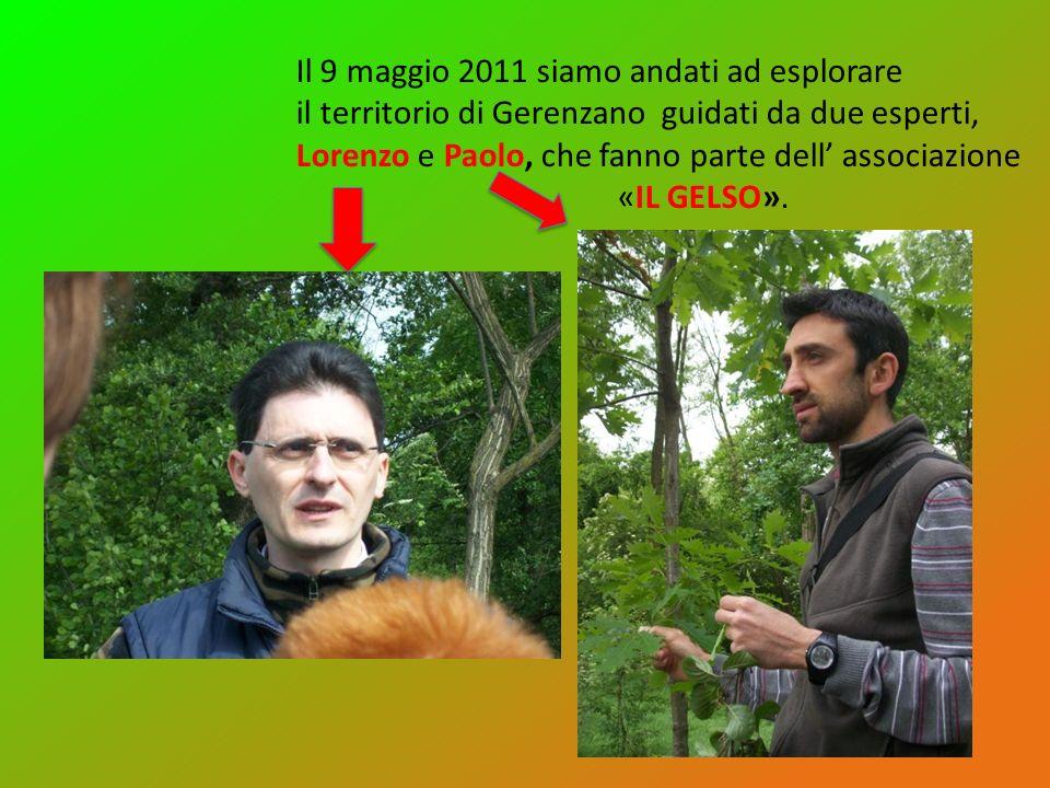 Il 9 maggio 2011 siamo andati ad esplorare il territorio di Gerenzano guidati da due esperti, Lorenzo e Paolo, che fanno parte dell associazione «IL G