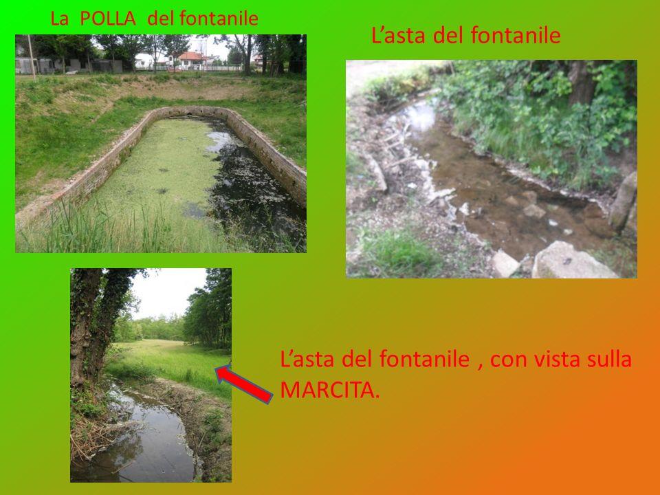 Lasta del fontanile La POLLA del fontanile Lasta del fontanile, con vista sulla MARCITA.