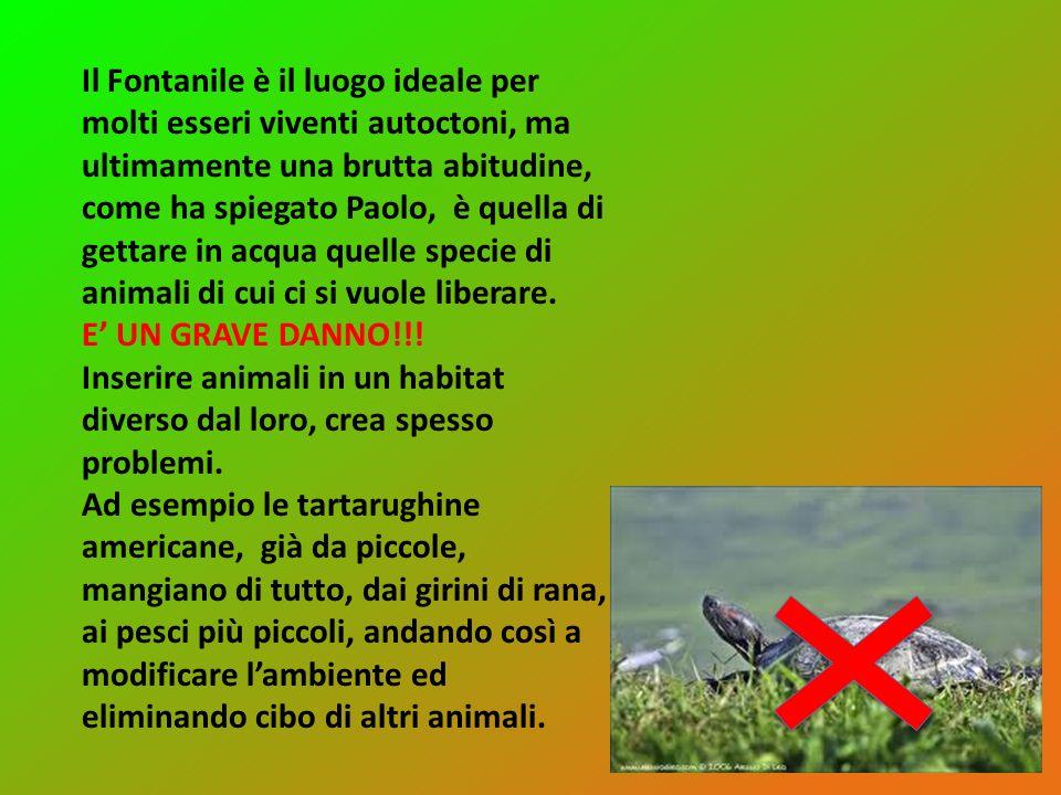 Il Fontanile è il luogo ideale per molti esseri viventi autoctoni, ma ultimamente una brutta abitudine, come ha spiegato Paolo, è quella di gettare in